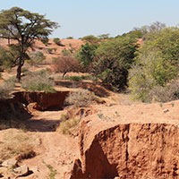 Dry_landscapes_of_Zambia.jpg