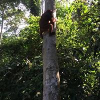 BorneoOrangutans-2.jpg