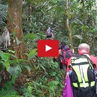 BorneoRainforest.jpg