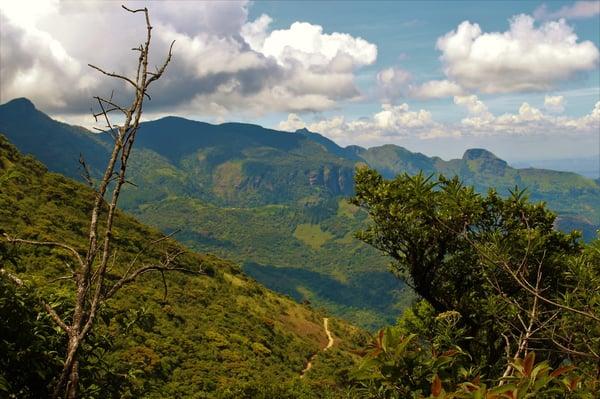 Trails through lush Knuckles vegetation-min