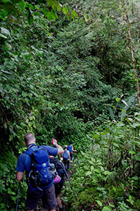 Trekking_rainforest_track
